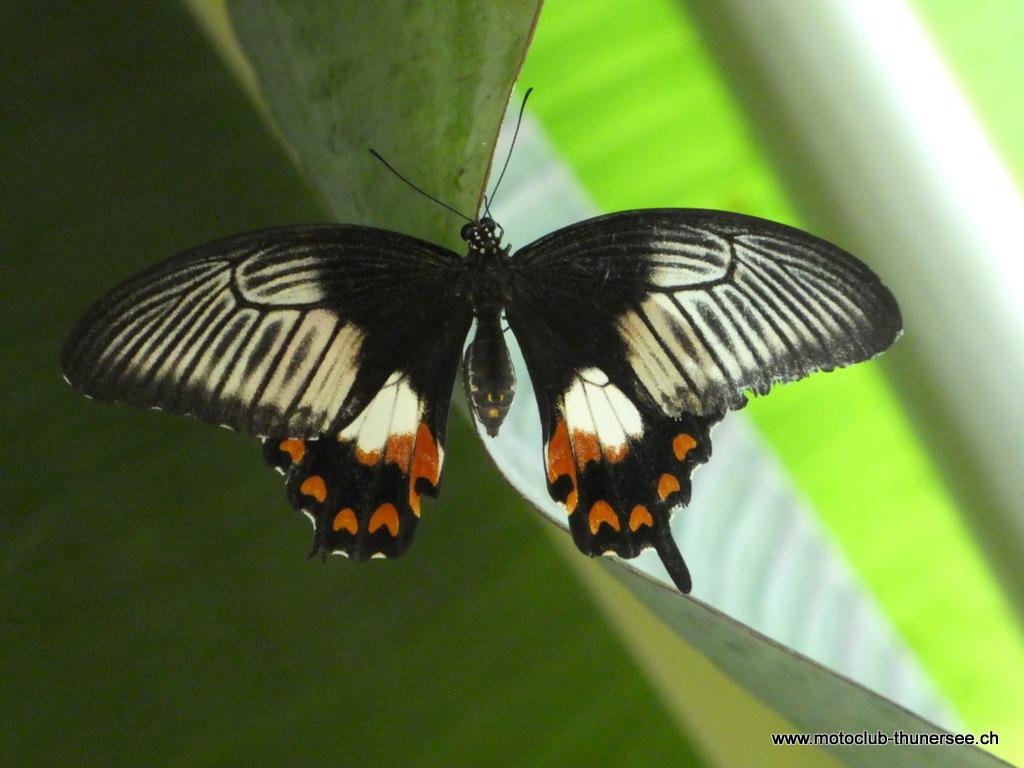 Papiliorama  (22)