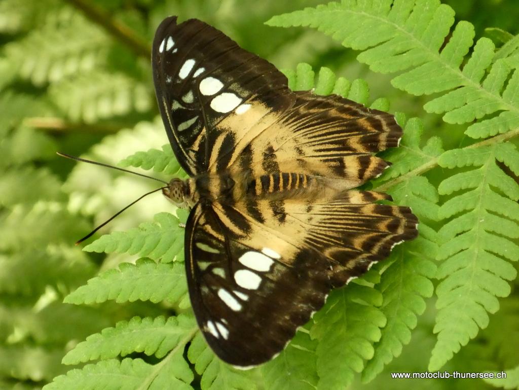 Papiliorama  (25)