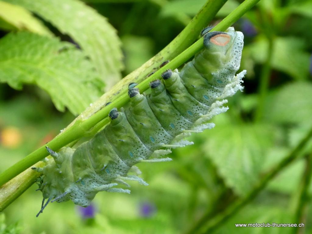Papiliorama  (32)