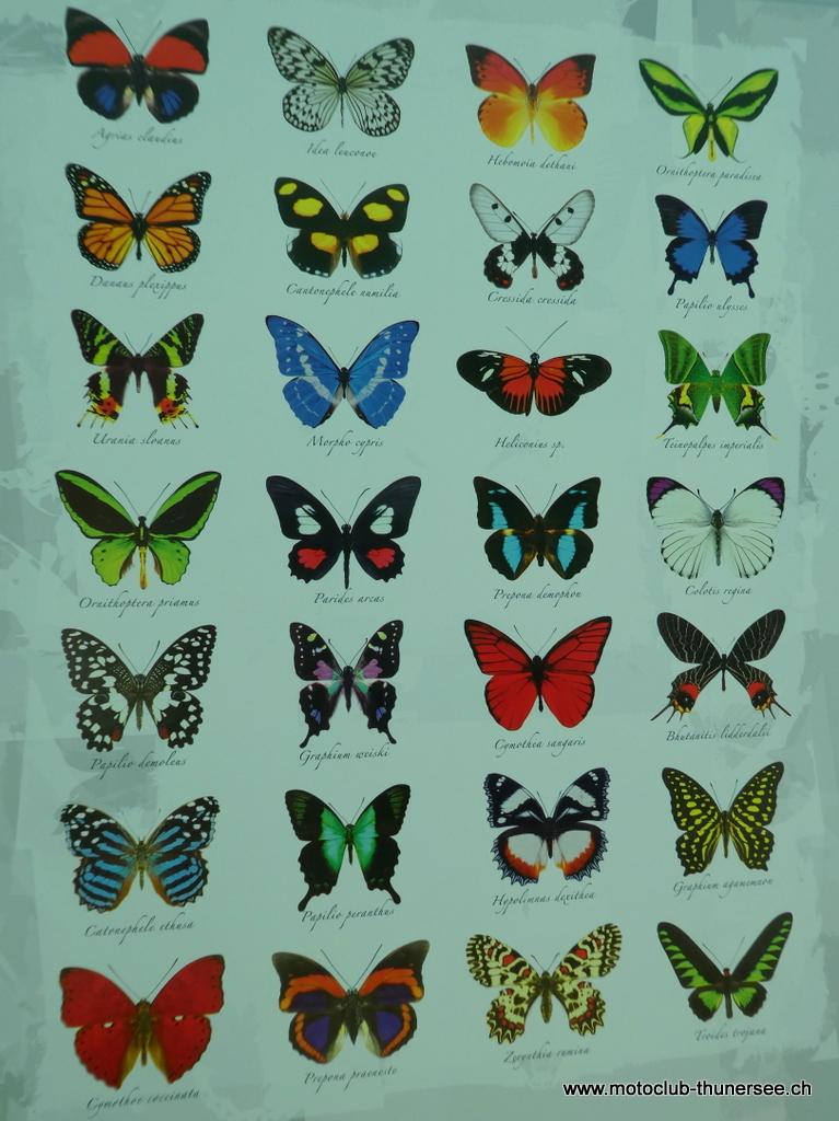 Papiliorama  (36)