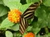 Papiliorama  (23)