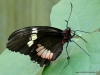 Papiliorama  (29)