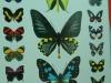 Papiliorama  (37)