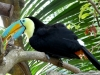 Papiliorama  (56)