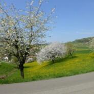 Kirschblütenfahrt ins Baselbiet 13. April 2014